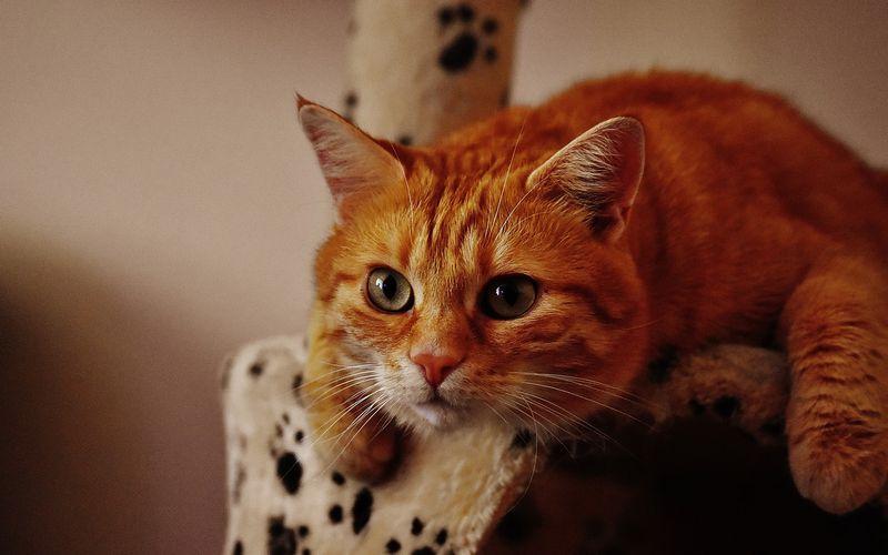 cat-1692702_1280